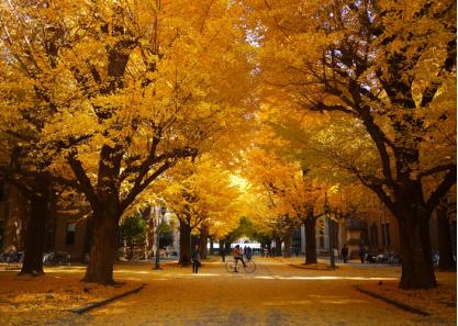 东京大学校园